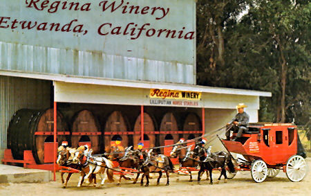 Regina Winery Where Minis Were Developed in California
